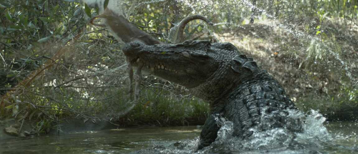programme tv d couvrez le plus gros crocodile du monde france 2. Black Bedroom Furniture Sets. Home Design Ideas